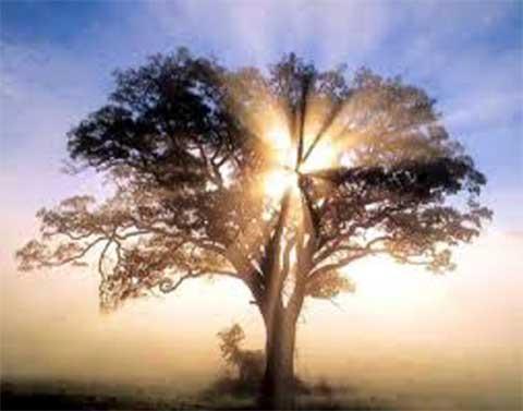 albero nel sole