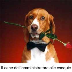 cane con rosa in bocca