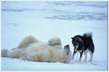 cane e orso