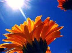 fiore nel sole