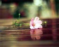 fiore galleggiante sull'acqua