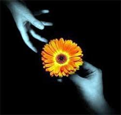 mano che porge un fiore giallo