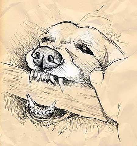 cane ringhioso