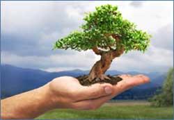 albero sul palmo della mano