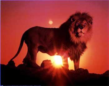 leone nel sole