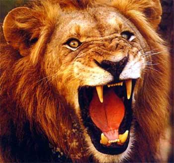 leone che ruggisce