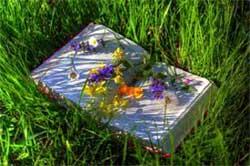 libro nell'erba