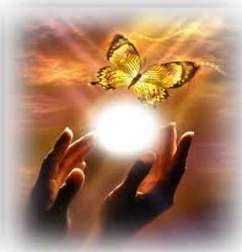 farfalla liberata nel sole