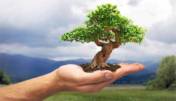 albero in palmo di mano