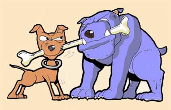 osso conteso da due cani