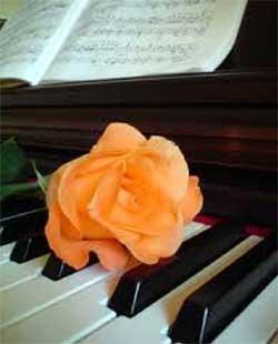 rosa su tastiera pianoforte