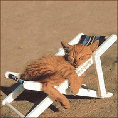 gatto addormentato su sdraio