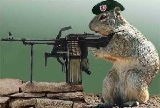 scoiattolo mitragliere