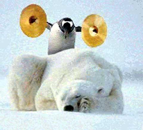 pinguino che sveglia un orso
