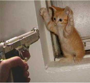 gattino con le zampe in alto minacciato da pistola